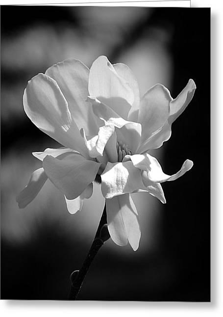 Monochrome Magnolia Greeting Card