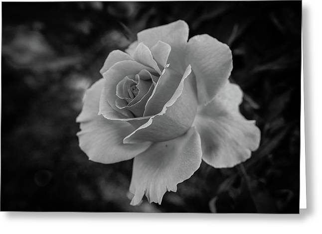 Monochrome Rose Macro Greeting Card