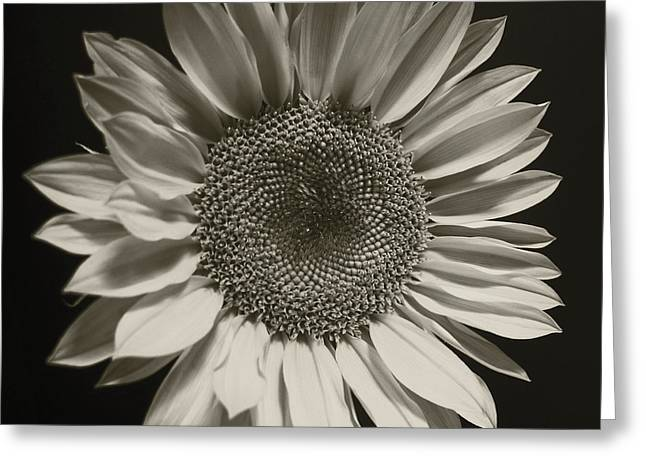 Monochrome Sunflower Greeting Card