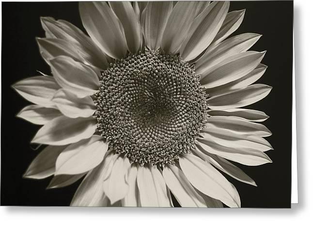 Monochrome Sunflower Greeting Card