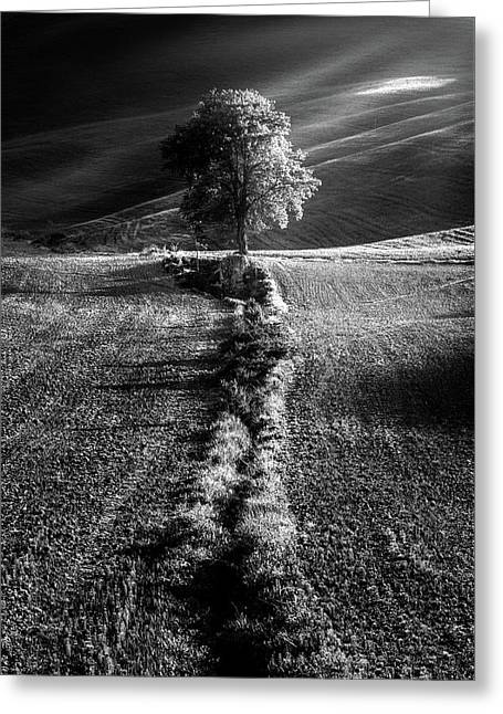 Monochrome Valley Greeting Card