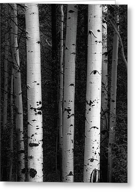 Greeting Card featuring the photograph Monochrome Wilderness Wonders by James BO Insogna