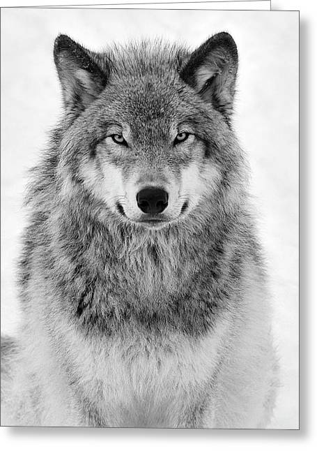 Monotone Timber Wolf  Greeting Card