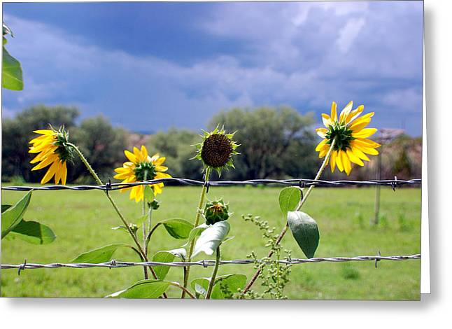 Monsoon Sunflowers Greeting Card