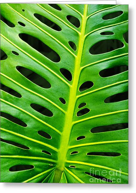 Monstera Leaf Greeting Card by Carlos Caetano