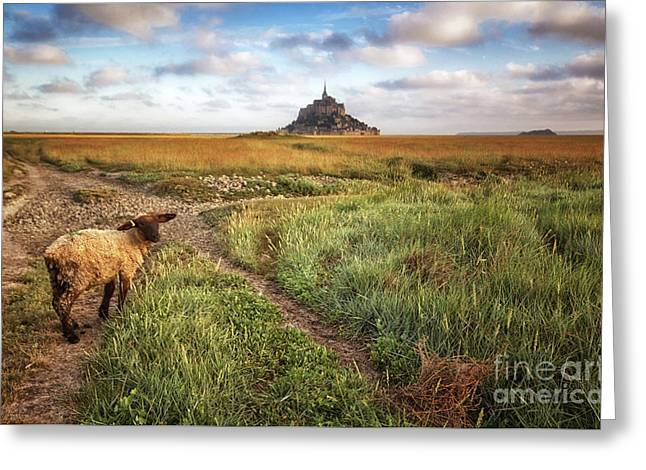 Mont Saint Michel's Sheep Greeting Card