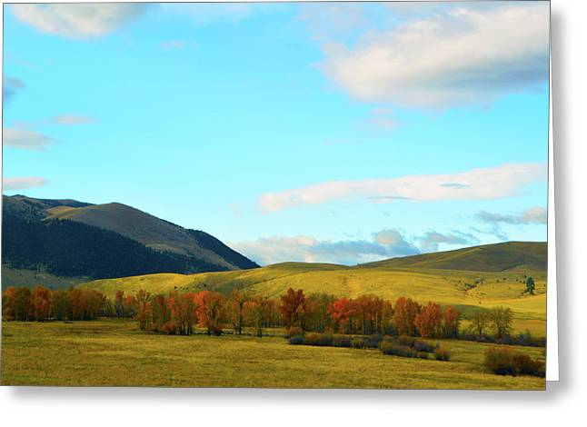 Montana Fall Trees Greeting Card