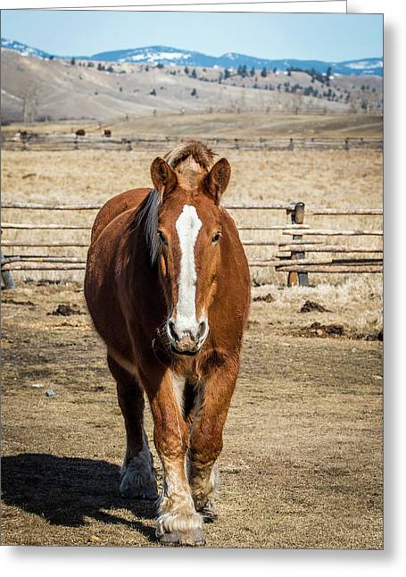 Montana Horse Ranch Greeting Card by Paul Freidlund