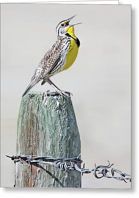 Greeting Card featuring the photograph Montana Meadowlark's Spring Song by Jennie Marie Schell
