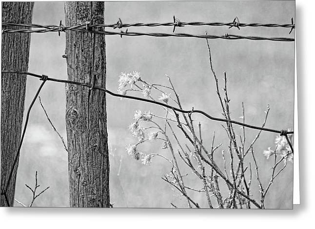 Montana Rustic Fence And Weeds Black And White Greeting Card