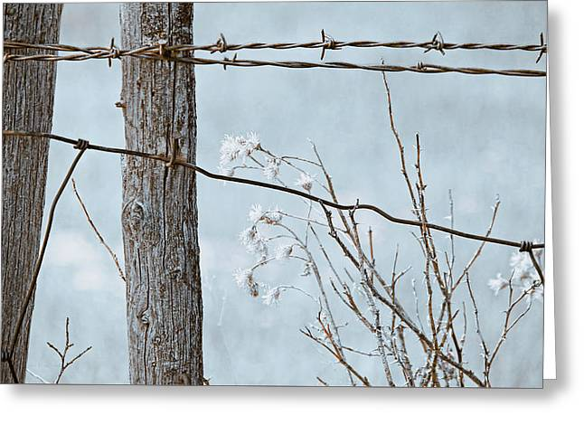 Montana Rustic Fence And Weeds  Blue Greeting Card