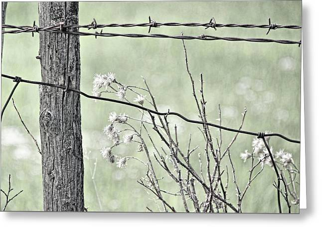 Montana Rustic Fence And Weeds Green  Greeting Card