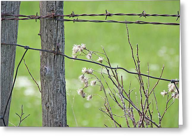 Montana Rustic Fence And Weeds  Greeting Card