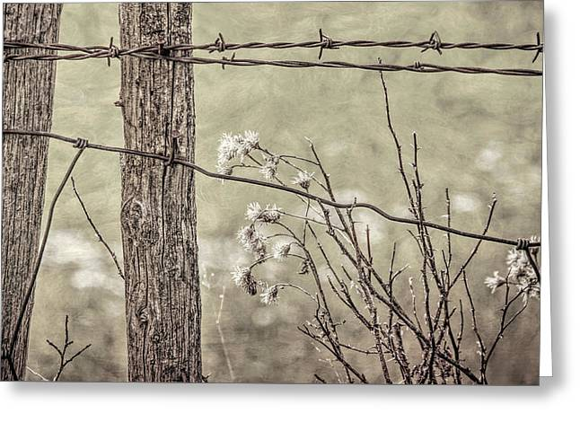 Montana Rustic Fence And Weeds Sepia Greeting Card