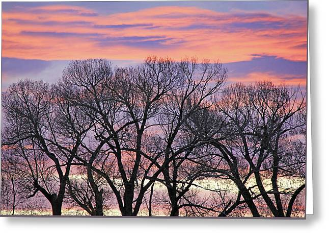 Greeting Card featuring the photograph Montana Sunrise Tree Silhouette by Jennie Marie Schell