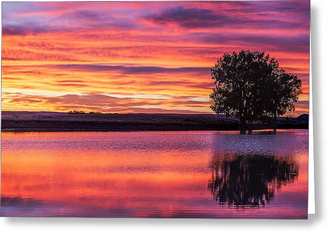 Montana Sunset Greeting Card by Todd Klassy