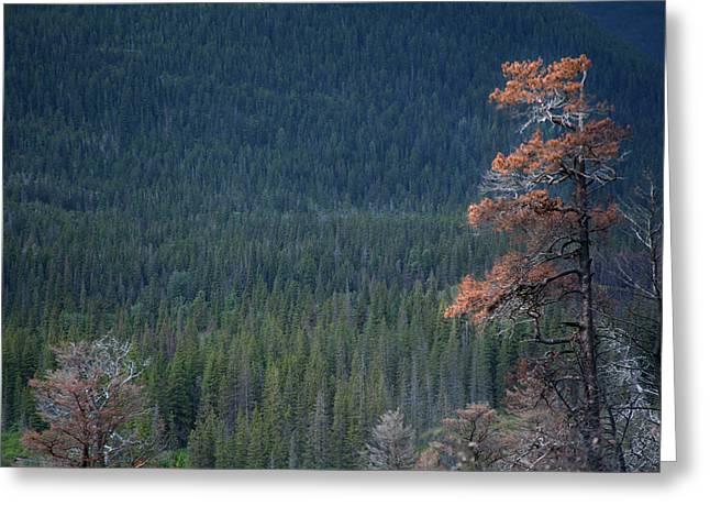 Montana Tree Line Greeting Card