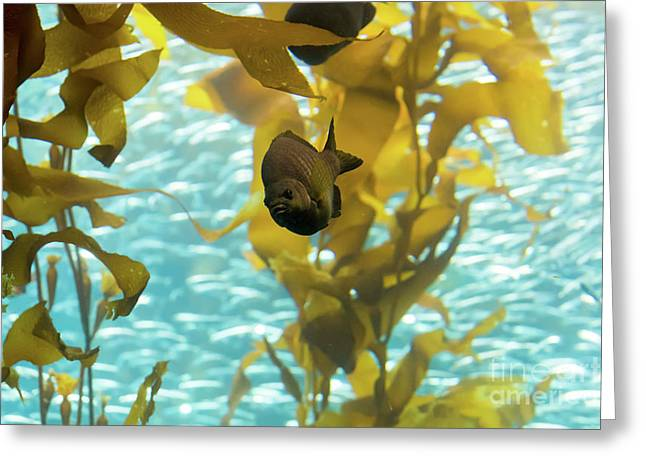 Monterey Bay Aquarium Greeting Card by Eyal Aharon