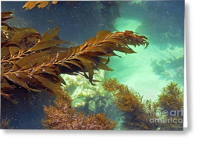 Monterey Bay Seaweed Greeting Card