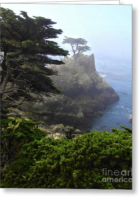 Monterey California - Lone Pine Greeting Card by Gregory Dyer