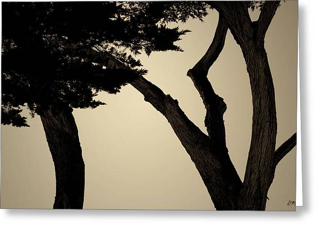 Monterey Cypress II Toned Greeting Card