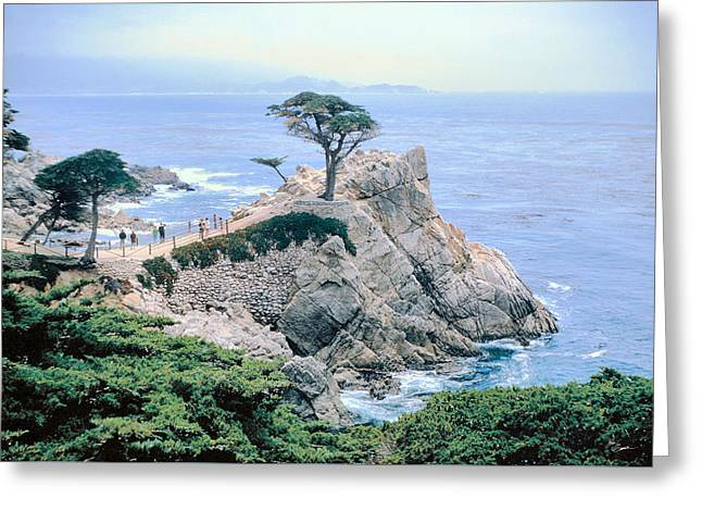 Monterey Cyprus  California Seacoast Seascape Picture Decor Greeting Card
