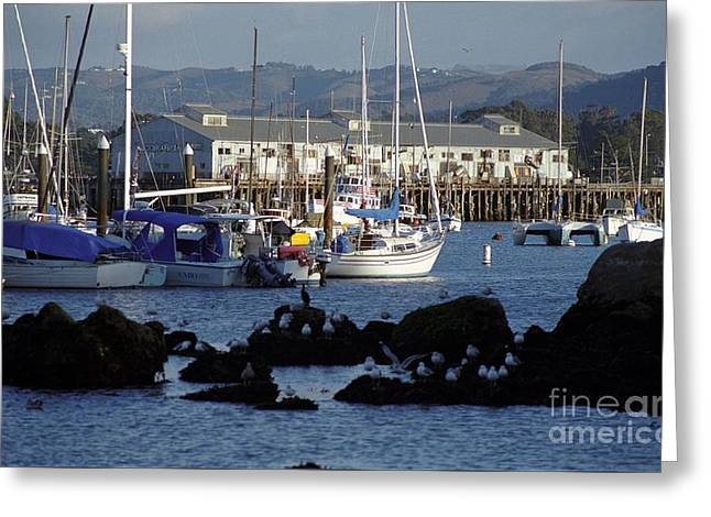 Monterey Harbor And Wharf 2 Greeting Card by James B Toy