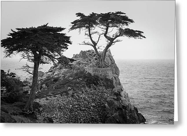 Monterey Peninsula II Bw Greeting Card