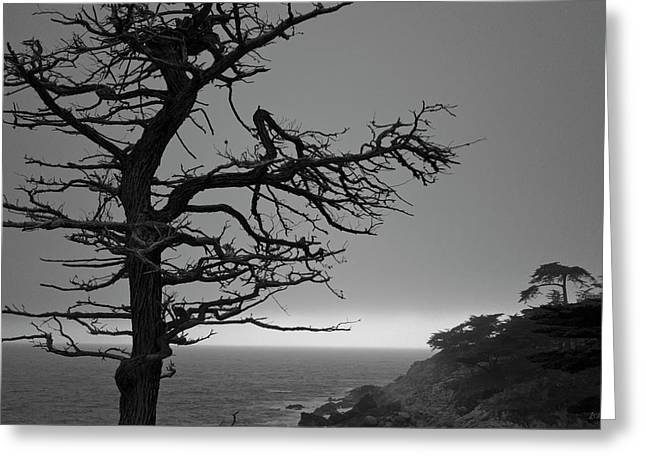 Greeting Card featuring the photograph Monterey Penninsula I Bw by David Gordon