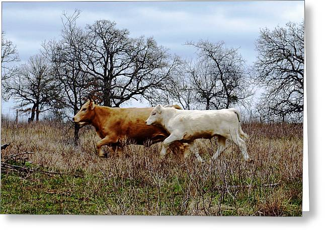 Moo On The Run Greeting Card