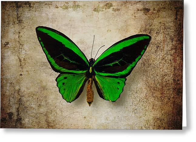 Moody Green Butterfly Greeting Card by Garry Gay