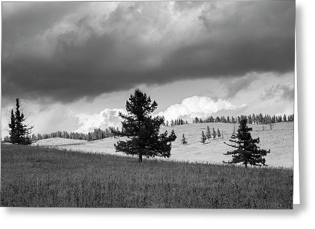 Moody Meadow, Tsenkher, 2016 Greeting Card