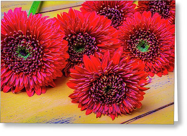 Moody Red Gerbera Dasies Greeting Card by Garry Gay