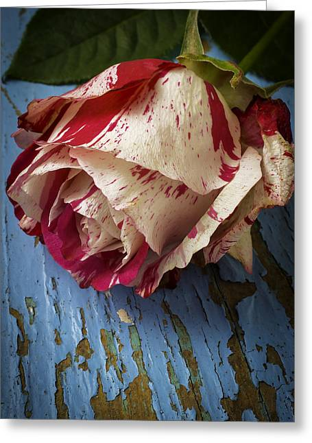 Moody Red White Rose Greeting Card by Garry Gay
