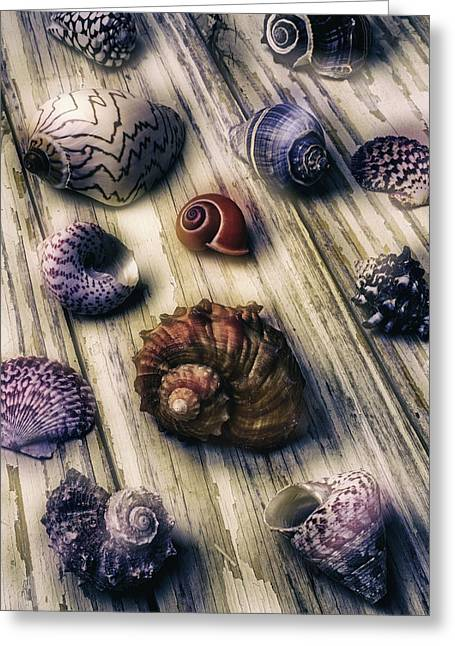 Moody Sea Shells  Greeting Card