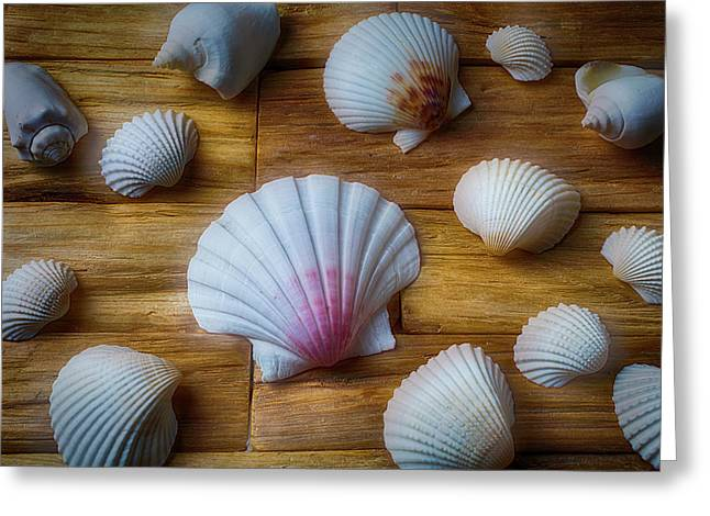 Moody Seashells Greeting Card by Garry Gay