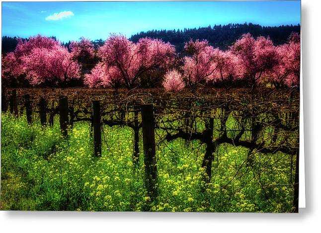 Moody Spring Vineyards Greeting Card