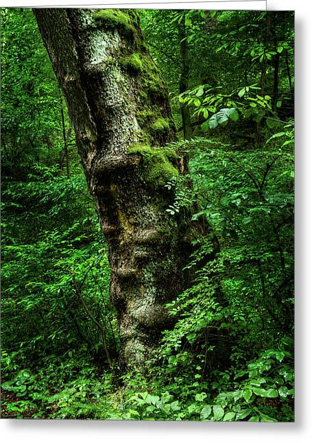 Greeting Card featuring the photograph Moody Tree In Forest by Dennis Dame