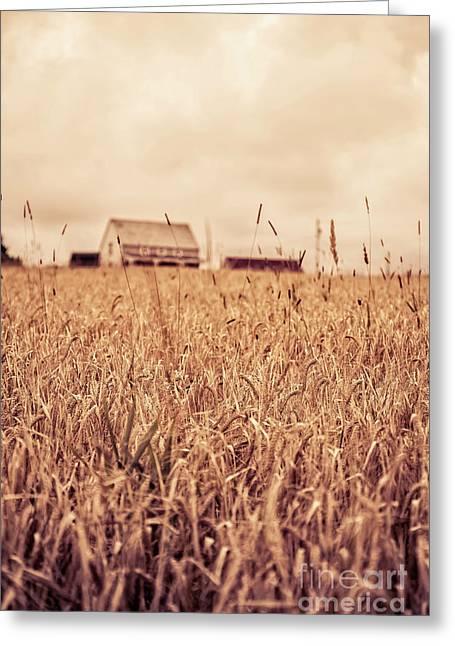 Moody Wheat Field Prince Edward Island Greeting Card