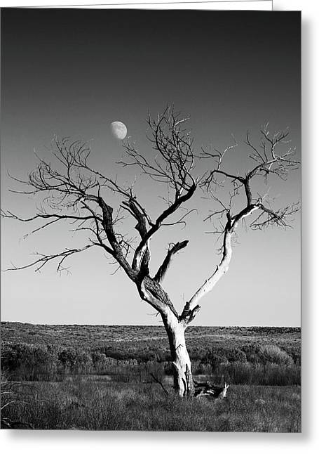 Moon And Memory At Bosque Del Apache N M Greeting Card