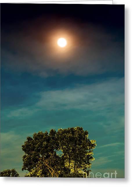 Moon And Tree Greeting Card