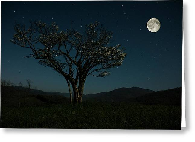 Moon Beams Greeting Card by Stephanie Hensley