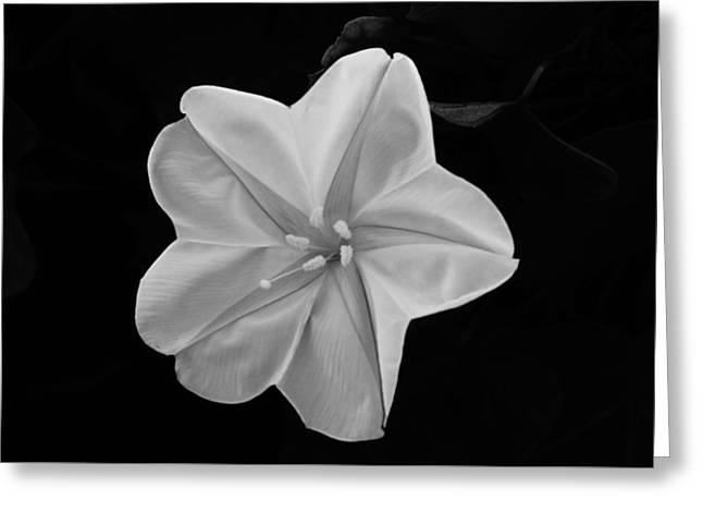 Moon Flower Greeting Card