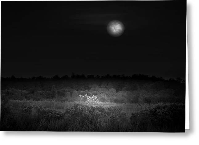 Moon Glow Greeting Card by Mark Andrew Thomas
