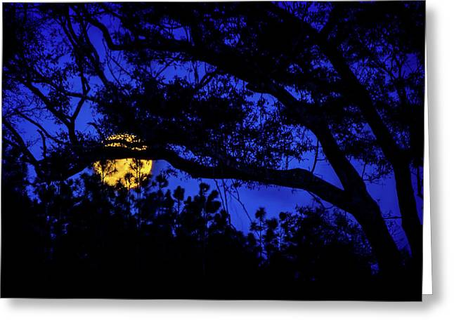 Moon Harvest Greeting Card by Mark Andrew Thomas
