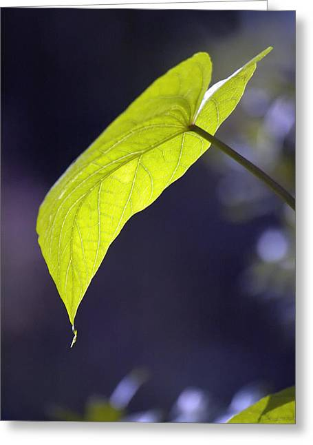 Moon Leaf Greeting Card by Ross Powell