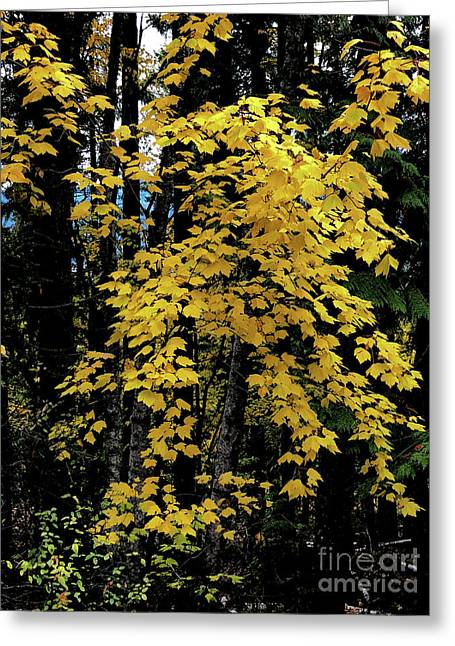 Moon Maple 2 Greeting Card