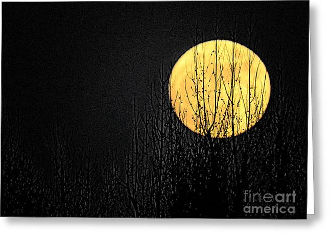 Moon Over The Trees Greeting Card