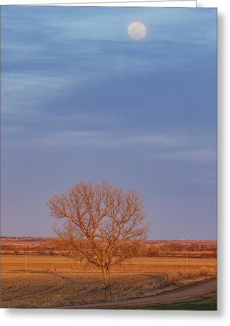 Moon Over Tree Greeting Card
