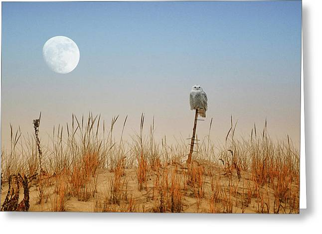 Moon Rise Snowy Owl Greeting Card